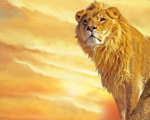 lion king 30 Cool Backgrounds For Desktop You Need To Check Today