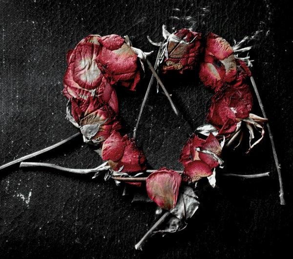 heart of dead roses 30 Brilliant Pictures of Hearts And Roses