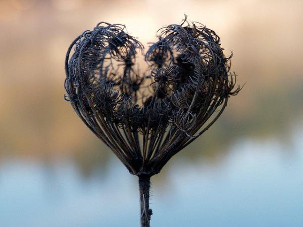 dried flower hearts 35 Pictures Of Broken Hearts To Make You Feel The Pain