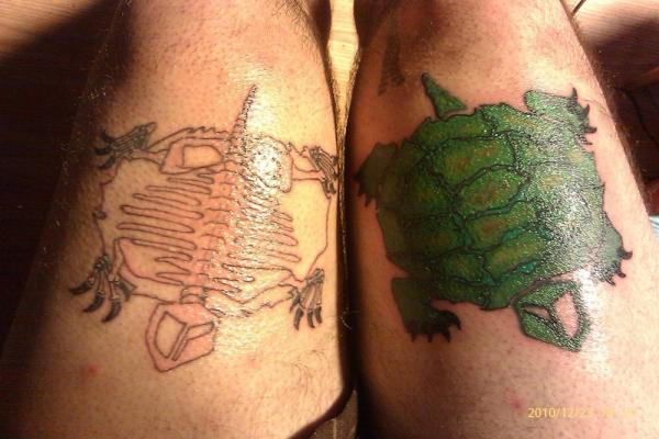 Live Turtle And Turtle Skeleton