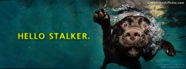 hello stalker funny dog facebook cover 30 Free Facebook Timeline Cover Backgrounds