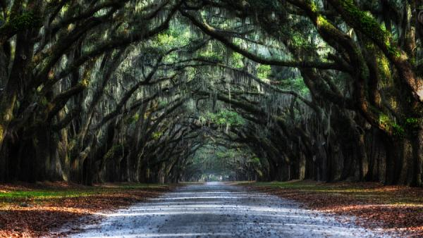 oak avenue 65 Pictures Of Trees To Make You Love Nature More