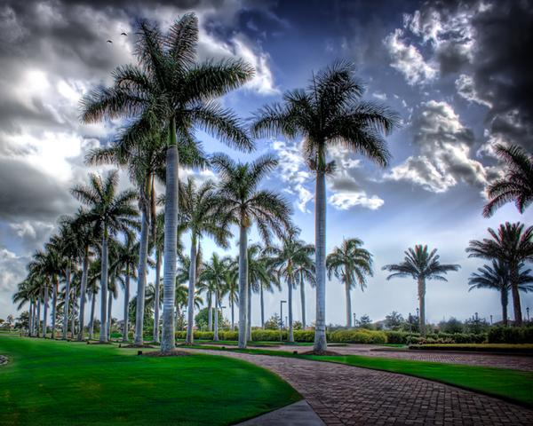 Palm Trees In HDR