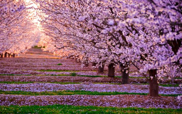 prelude to spring 65 Pictures Of Trees To Make You Love Nature More