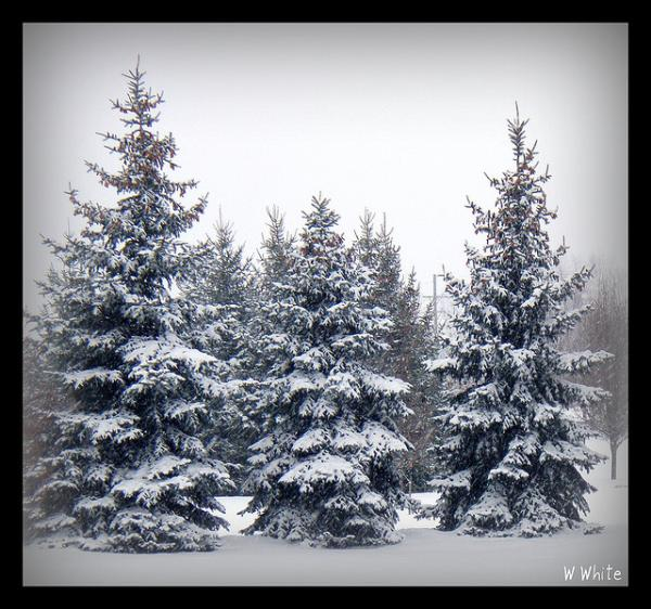 snowy trees 65 Pictures Of Trees To Make You Love Nature More