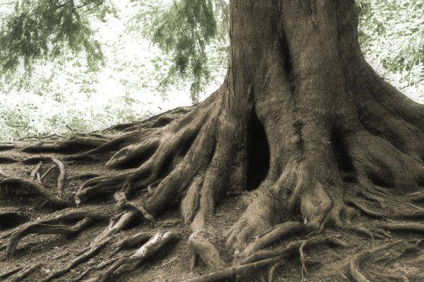 trees root 65 Pictures Of Trees To Make You Love Nature More