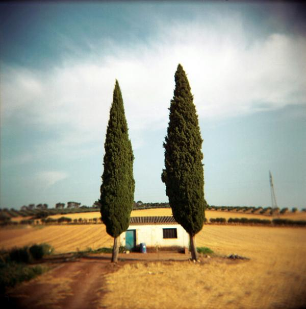 Two Cypress Trees
