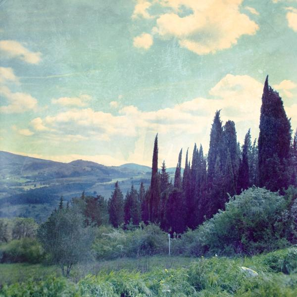 vintage cypress 65 Pictures Of Trees To Make You Love Nature More