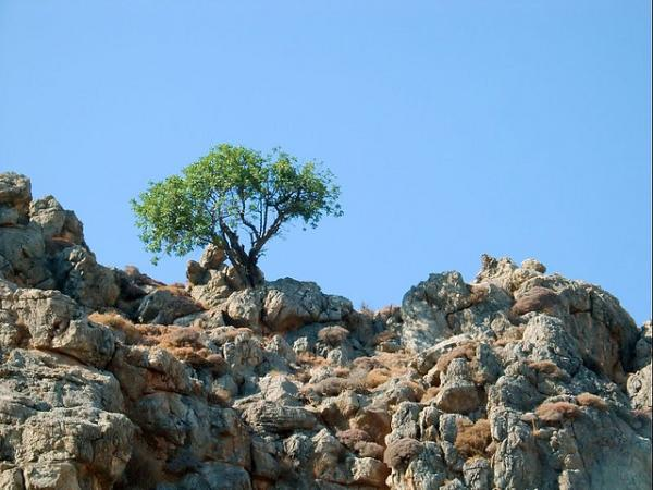 wild olive tree 65 Pictures Of Trees To Make You Love Nature More