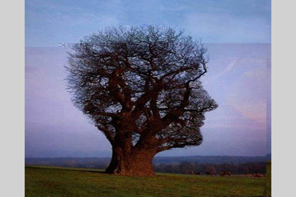scary tree 30 Scary Optical Illusions To Charge Your Wits