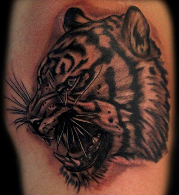 tiger 160 Tattoos Pictures Which Are Marvelous