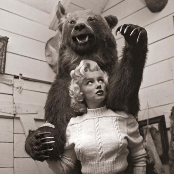 monroe and bear 50 Extraordinary Marilyn Monroe Pictures