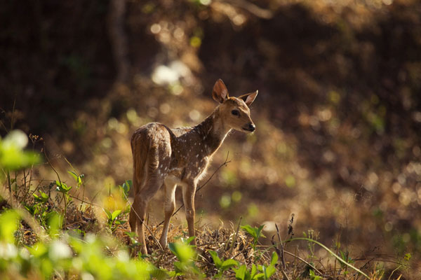 baby spotted deer 30 Lovely Pictures of Baby Animals