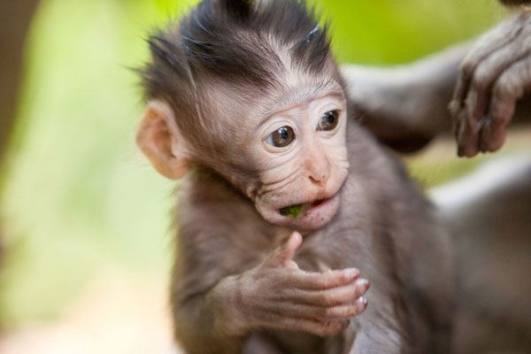 cute little baby monkey 30 Lovely Pictures of Baby Animals