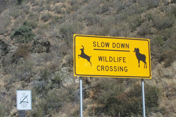 wildlife crossing 50 Hilarious Pictures Which Are Drool Worthy