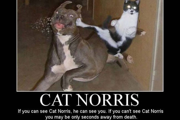 funny dog vs cat quotes
