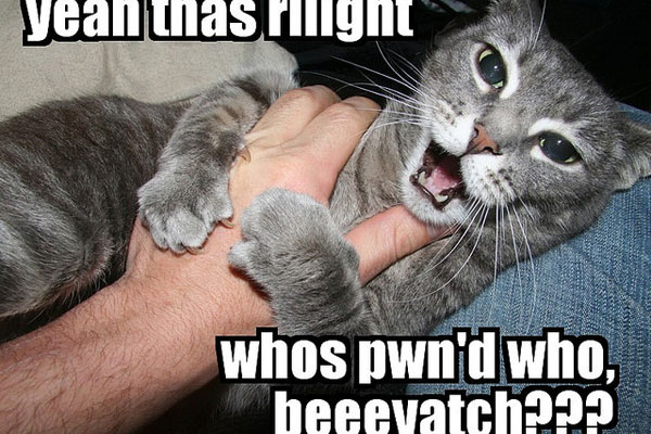 Funny Cat Drinking Meme : Funny pictures with sayings you should check today slodive