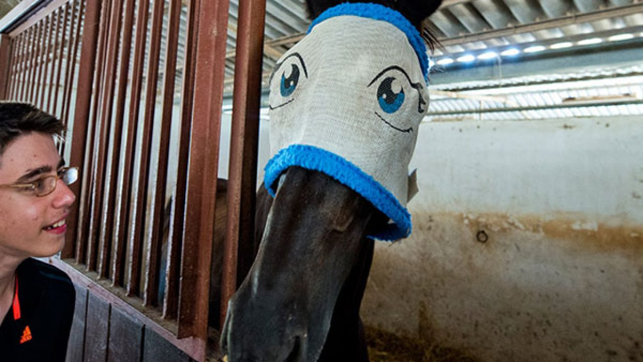 Horse Pictures 25 Funny Examples Design Press
