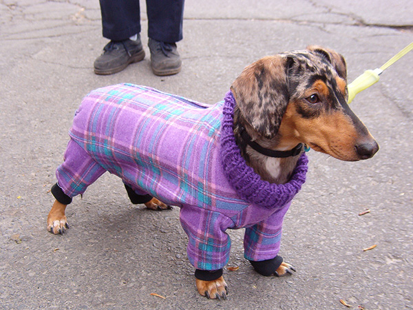 gorgeous dachshund 45 Funny Dog Pictures Which Will Bring Smile On Your Face