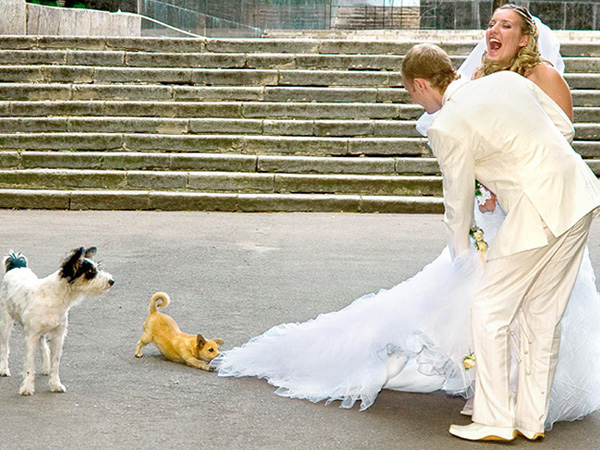 kidnapping bride 45 Funny Dog Pictures Which Will Bring Smile On Your Face