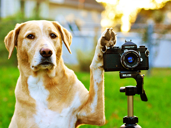 Dog Behind The Cam