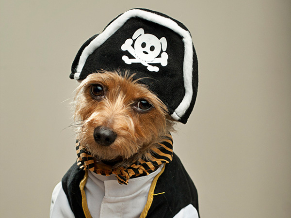 Pirate Funny Dog