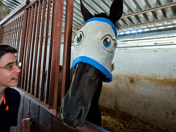 Funny Horse Cartoon Face
