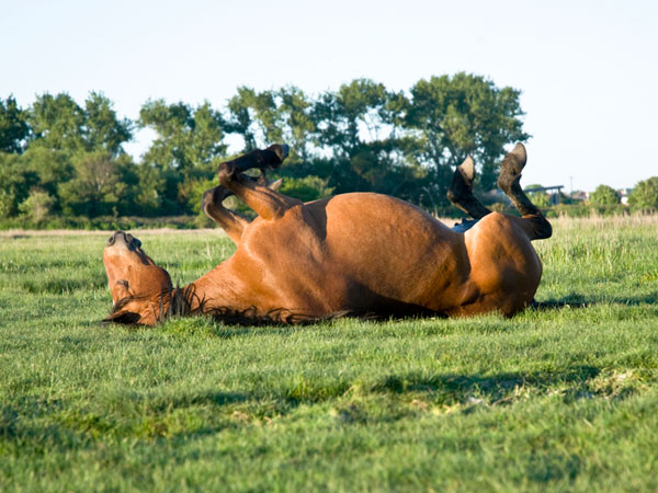 sleeping horse 25 Funny Horse Pictures Which Will Make You Laugh