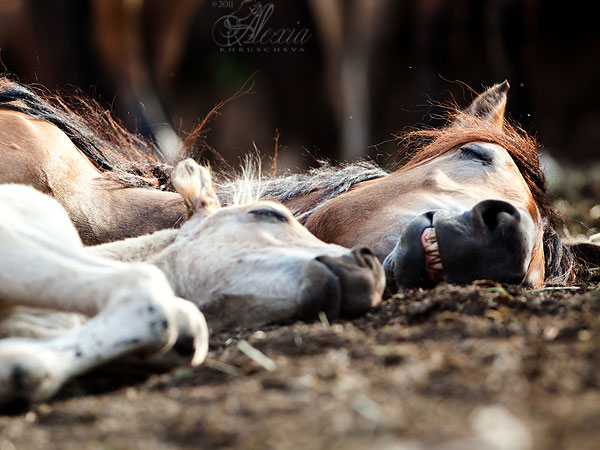 sweet dreams 25 Funny Horse Pictures Which Will Make You Laugh
