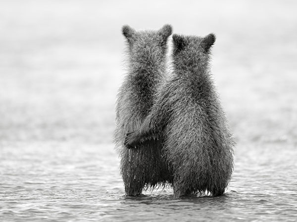 Small Cute Animals Holding Each Other