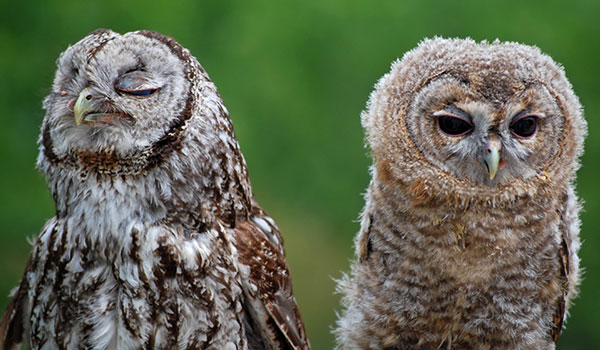 Owl Couple Making Faces