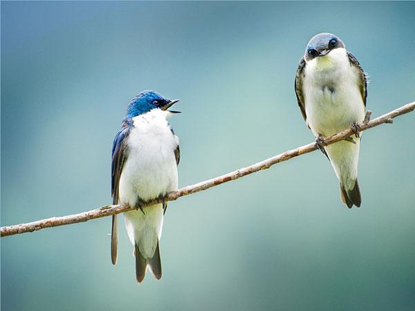 Bird Couple Quarreling Funny Picture