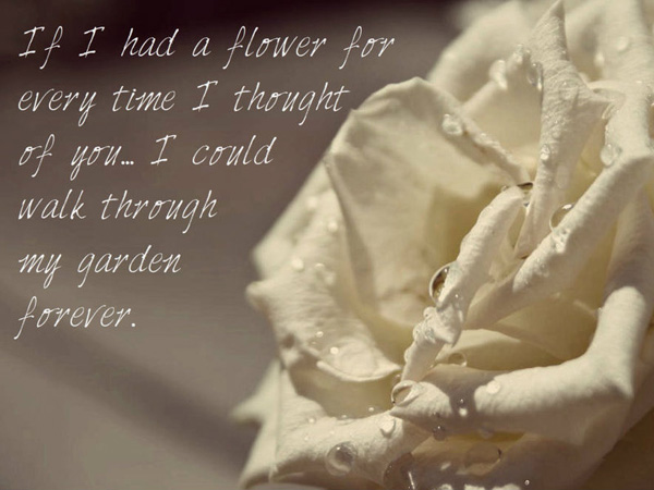 white rose love quote 25 Love Quote Pictures Which Are Romantic