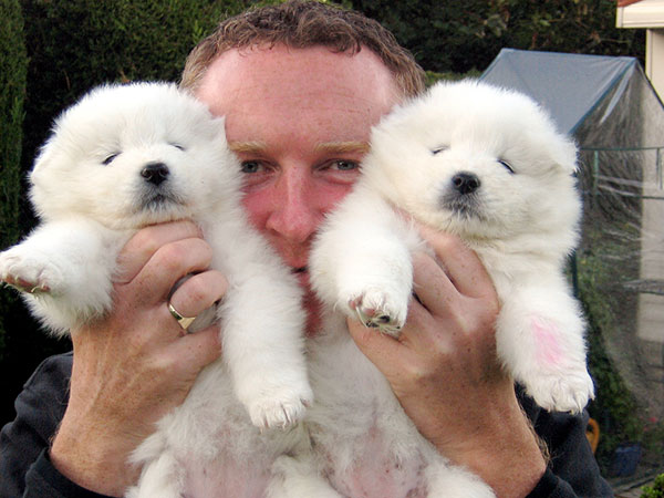 cute samoyed puppies 30 Lovely Pictures of Cute Puppies