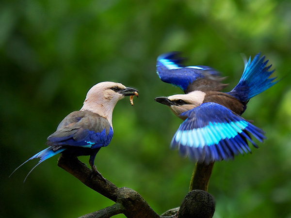 Birds Blue Pretty Picture