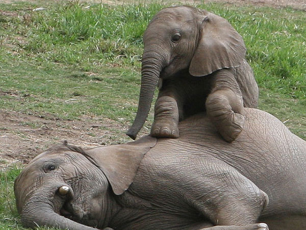 cute elephant 30 Striking Cute Pictures of Animals