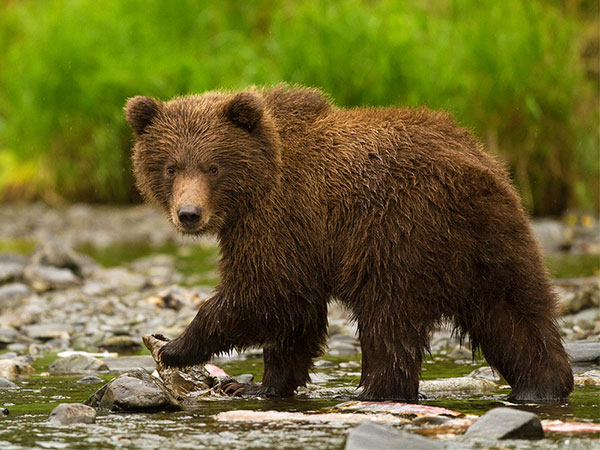 cute grizzly cub 30 Striking Cute Pictures of Animals