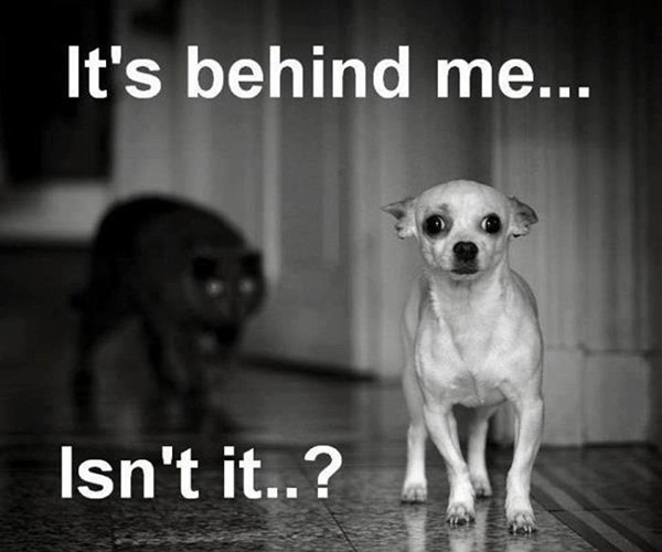 behind me 25 Funny Dog Pictures With Captions