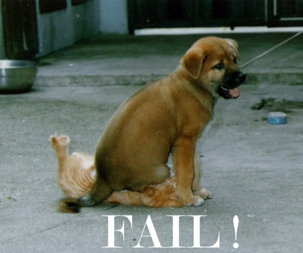 funny moment 25 Funny Dog Pictures With Captions