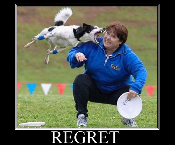 fuuny regret 25 Funny Dog Pictures With Captions