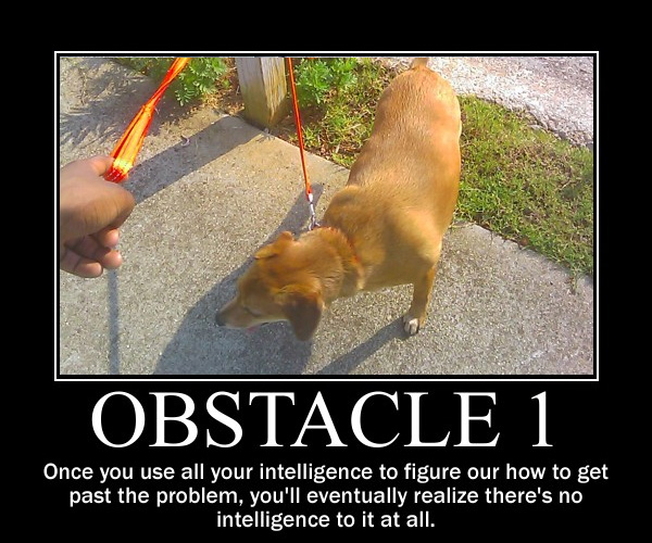 obstacle demotivation 25 Funny Dog Pictures With Captions