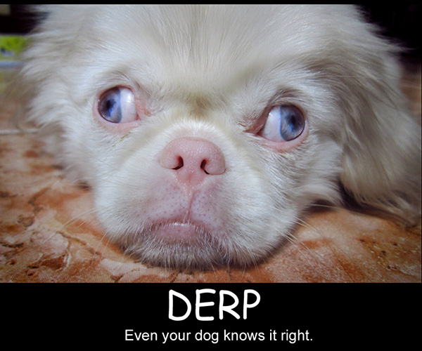 right derp 25 Funny Dog Pictures With Captions