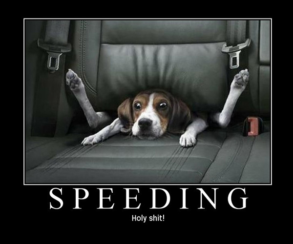 speeding fail 25 Funny Dog Pictures With Captions
