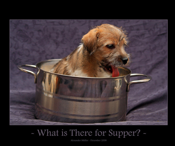 what supper 25 Funny Dog Pictures With Captions