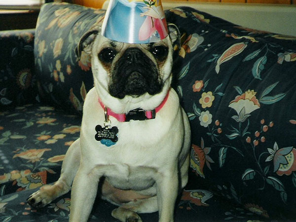 Happy Birthday Pug