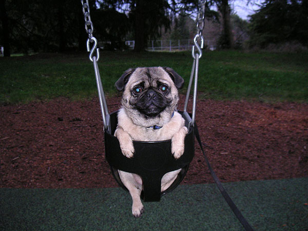 Funny On The Swing