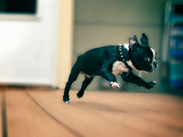 batman puppy 25 Funny Puppy Pictures You Will Definitely Love