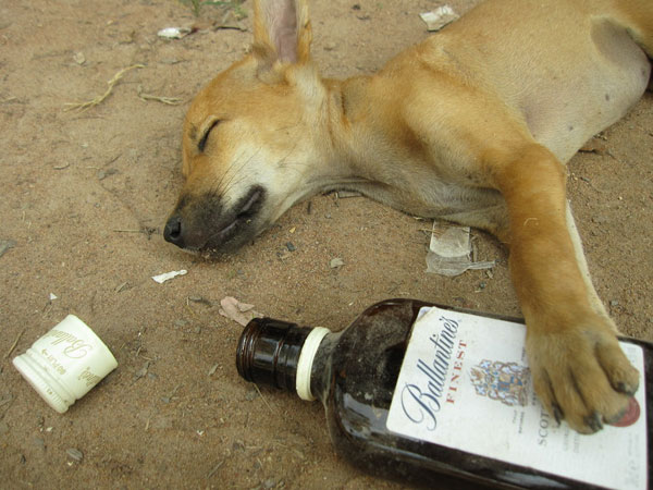 drunk puppy 25 Funny Puppy Pictures You Will Definitely Love