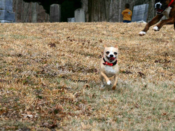 run tobi run 25 Funny Puppy Pictures You Will Definitely Love