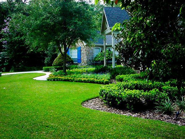 Go Green Inexpensive Landscape